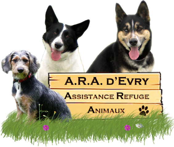 Association - Assistance Refuge Animaux