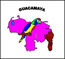 Association - Guacamaya