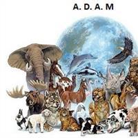 Association - ADAM Association Des Animaux Maltraités