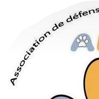 Association - ADAN