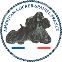 Association - American Cocker Spaniel France
