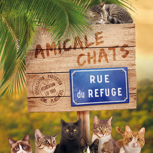 Association - Amicale Chats
