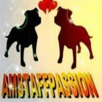 Association - amstaffpassion