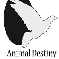 Association - Animal Destiny