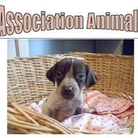 Association -  Animals'33