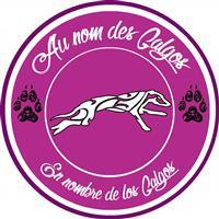 Association - Association Au nom des Galgos