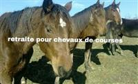 Association association cheval sauvetage