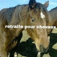 Association - association cheval sauvetage