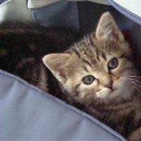 Association - association de protection des chats errants