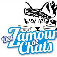 Association - Association des z'amours de chats