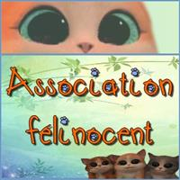 Association - Association Félinocent