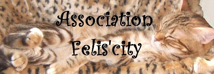 Association - Association Felis'city