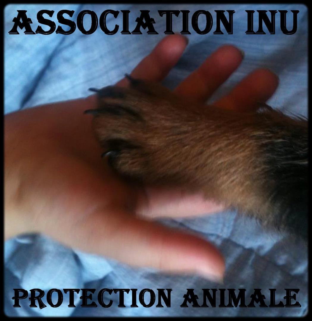 Association - Association INU
