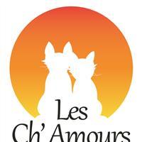 Association - Association Les Ch'Amours