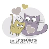 Association Association Les EntreChats