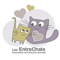 Association - Association Les EntreChats