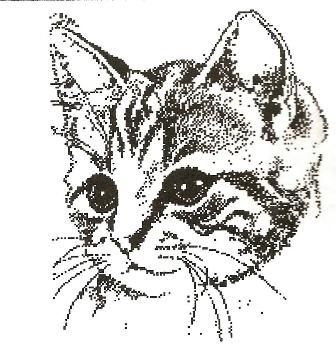 Association - Au bonheur des chats, de Lesges