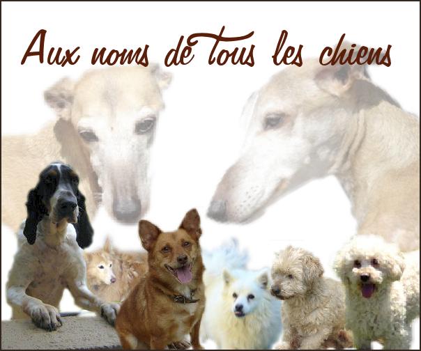 Association - Aux noms de tous les chiens