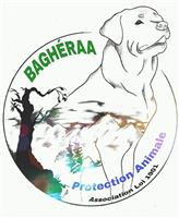 Association Bagheraa