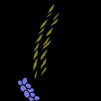 Association - BEDE