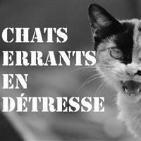 Association - chats  errants en détresse