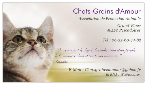 Association - chats grains d'amour