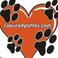 Association -  Coeur à 4 Pattes