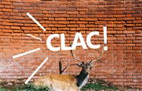 Association Collectif Clac!