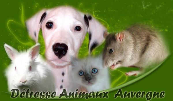 Association - Détresse Animaux Auvergne