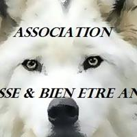 Association - Detresse et Bien Etre Animal