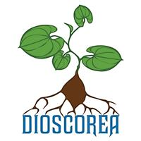 Association DIOSCOREA