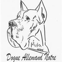Association - Dogue Allemand Notre