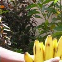 Association - Graines de papaye solidaire