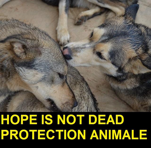 Association - Hope is not dead
