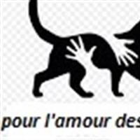 Association - POUR L'AMOUR DES CHATS