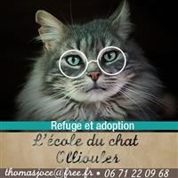 Association - L'école du Chat d'Ollioules