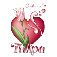 Association - LASO TULIPA