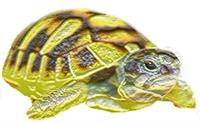 Association Ligue pour la protection des tortues