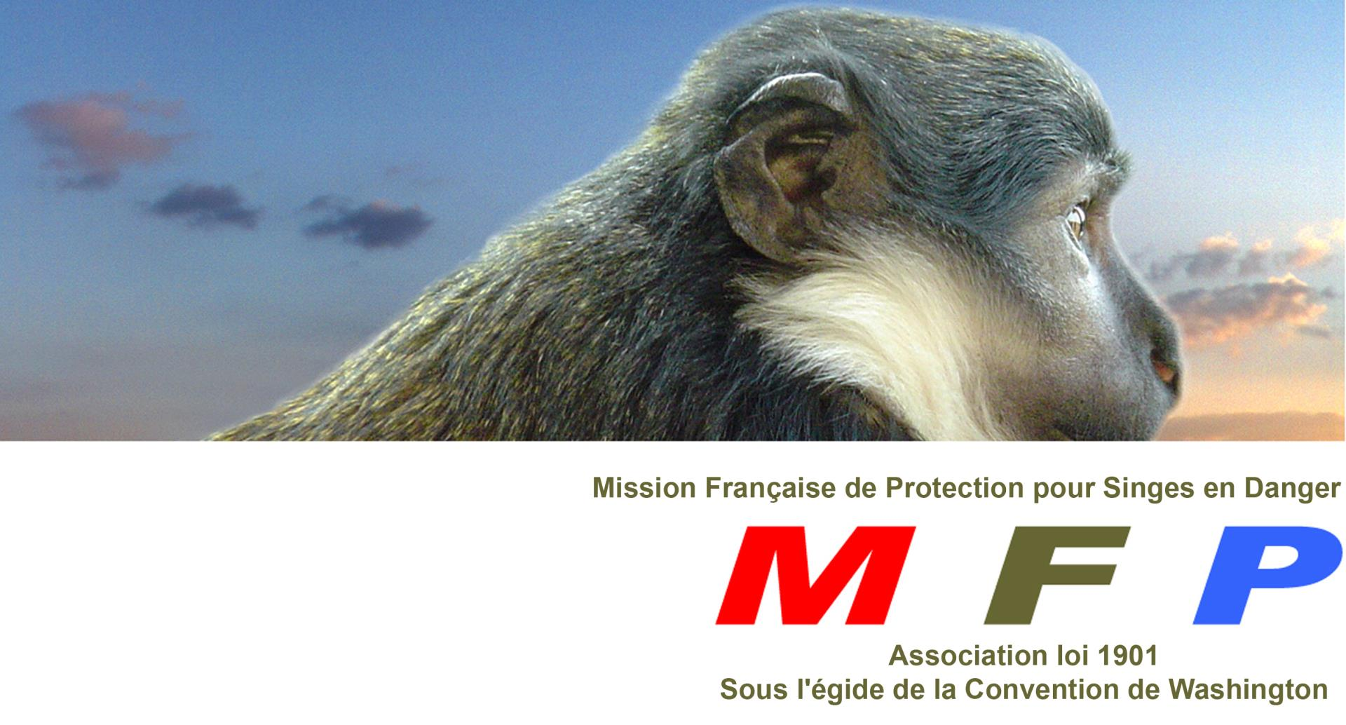 Association - MFP