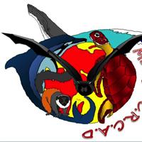 Association - Moidjio C.R.C.A.D. (Centre de Recherche, Conservation et Aide au Development)