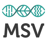 Association - MSV GRand-Est
