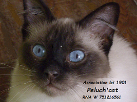 Association - Peluch'cat