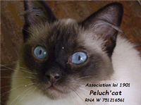 Association Peluch'cat