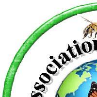 Association - PermAlyce 52