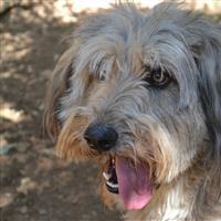 Association - Refuge aux secours des animaux malheureux