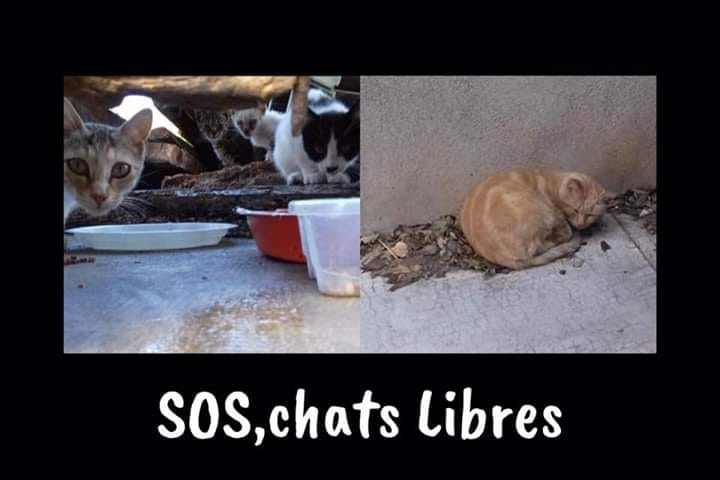 Association - S.O.S Chats Libres