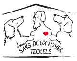 Association - Teckels Sans Doux Foyer