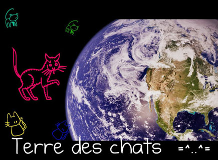 Association - Terre des Chats