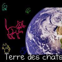 Association - Terre des Chats