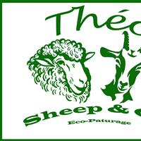 Association - Théo Sheep and Co'